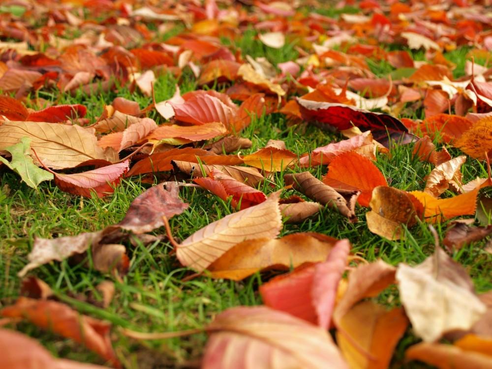 fallen-leaves-1384973951jvQ